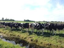 Meadows in Waterland